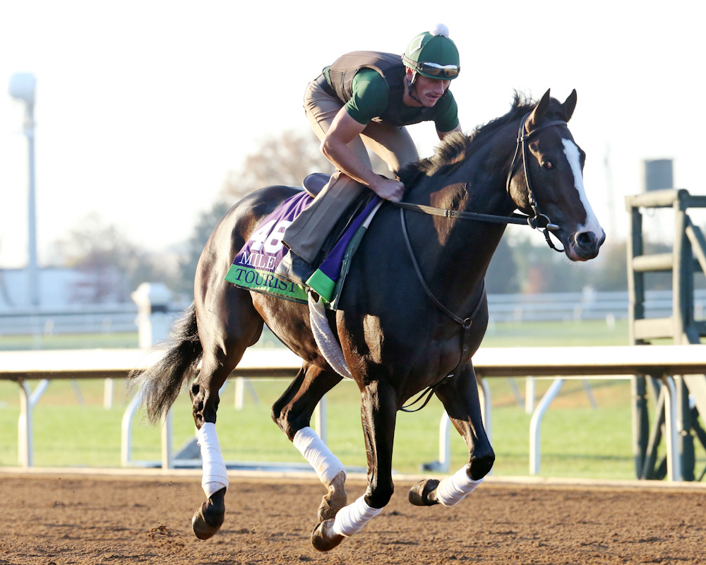 Tourist Morning Workout Keeneland Race Course 102315