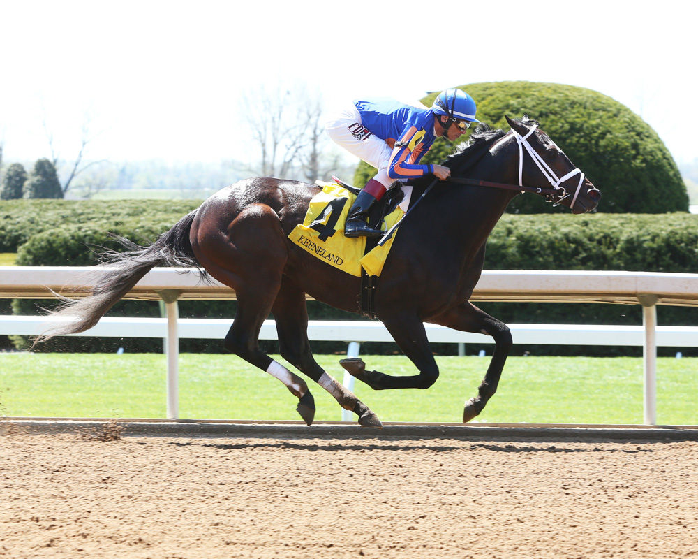 Stradivari Crushes Keeneland Allowance Race, Preakness Next?